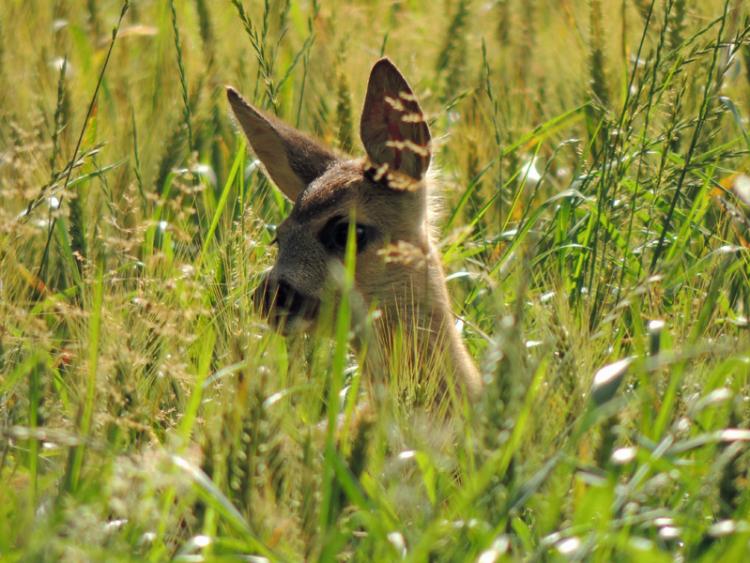 images/Natur_Slide/Natur_013.jpg