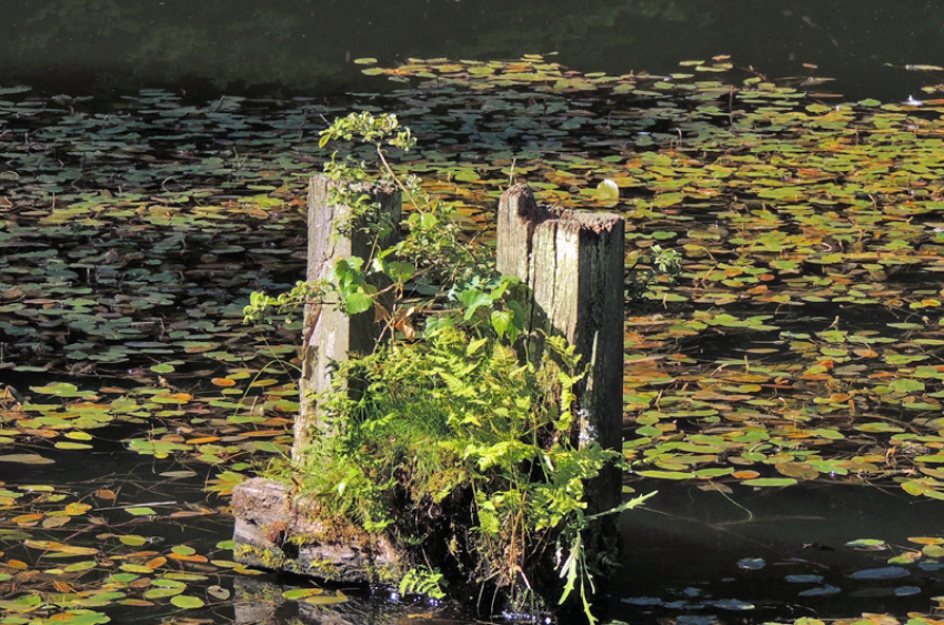 images/Natur_Slide/Natur_012.jpg