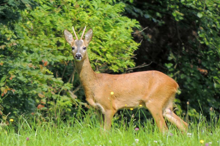 images/Natur_Slide/Natur_014.jpg