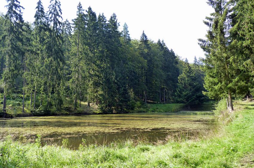 images/Natur_Slide/Natur_028.jpg
